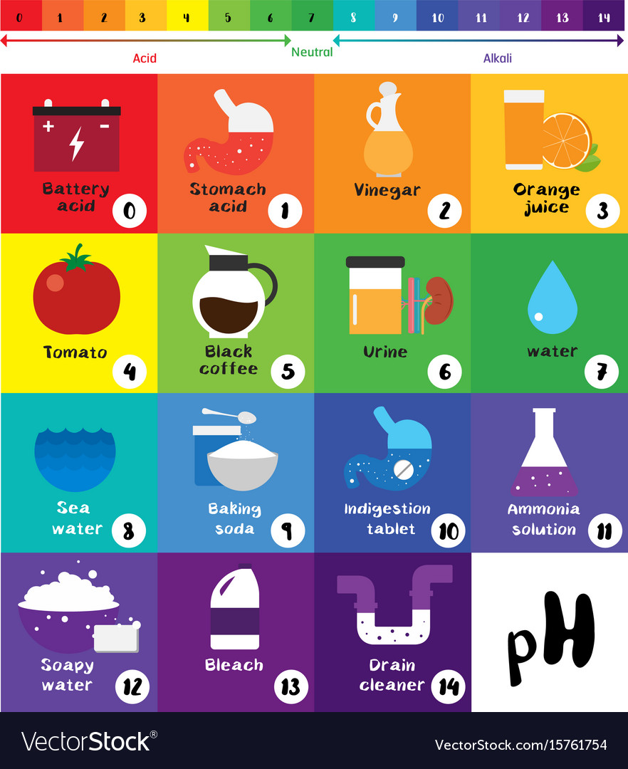 Ph scale universal indicator ph color chart Vector Image for Ph Scale Universal Indicator  103wja
