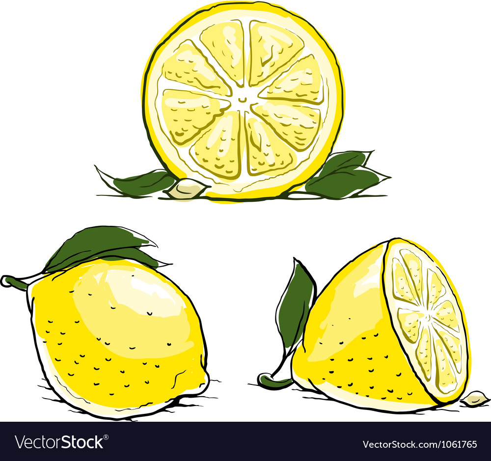 Ripe lemon with leaf vintage vector image