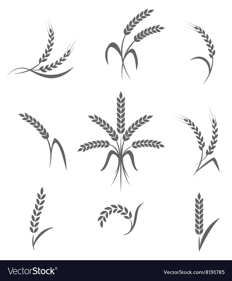 Wheat ears or rice icons set Agricultural symbols vector image
