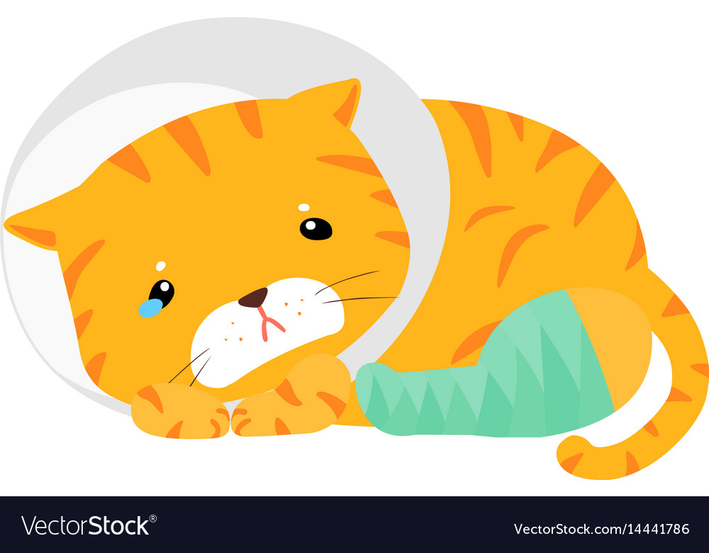 Cat injury splinting leg vector image