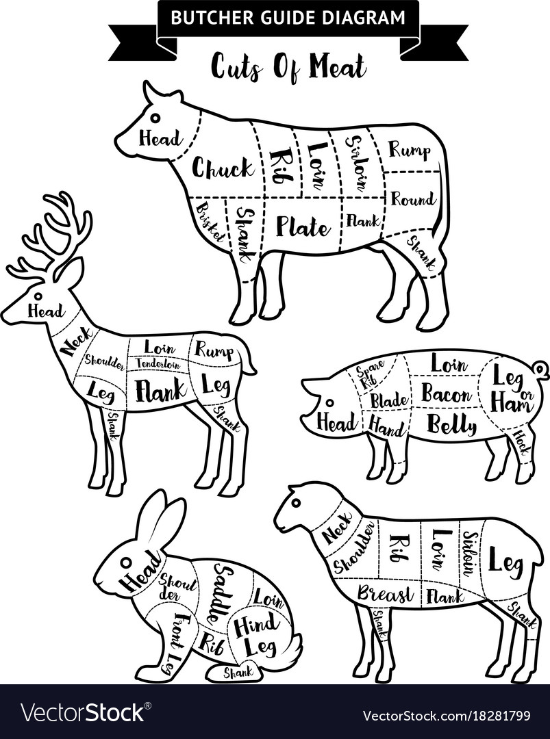 Butcher guide cuts of meat diagram royalty free vector image butcher guide cuts of meat diagram vector image pooptronica