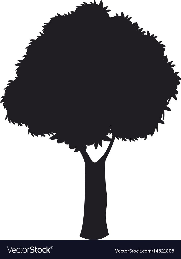 Silhouette tree woody nature dark stem design vector image