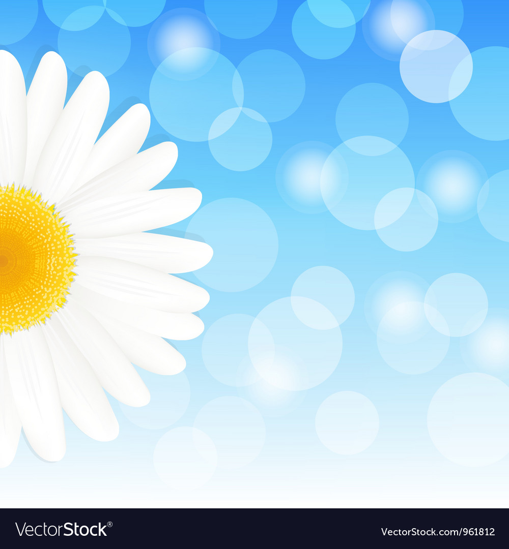 Daisy Background vector image