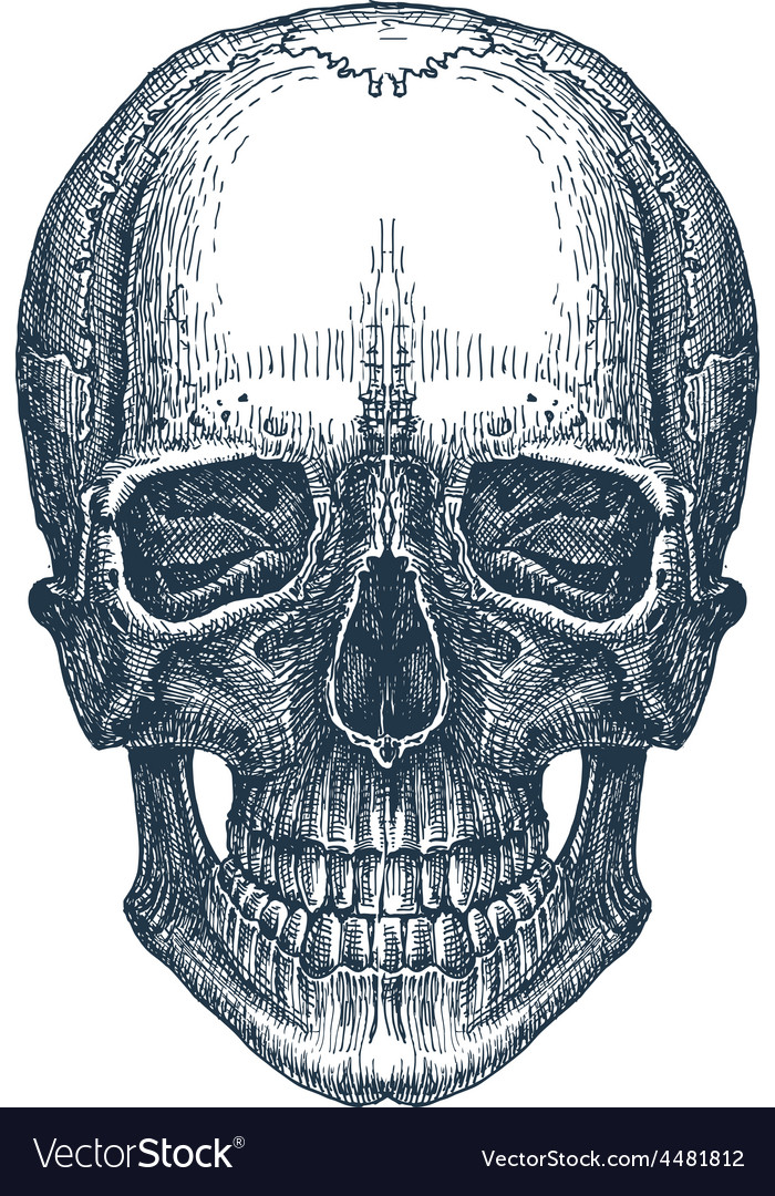 Skull logo design template fresh death Royalty Free Vector