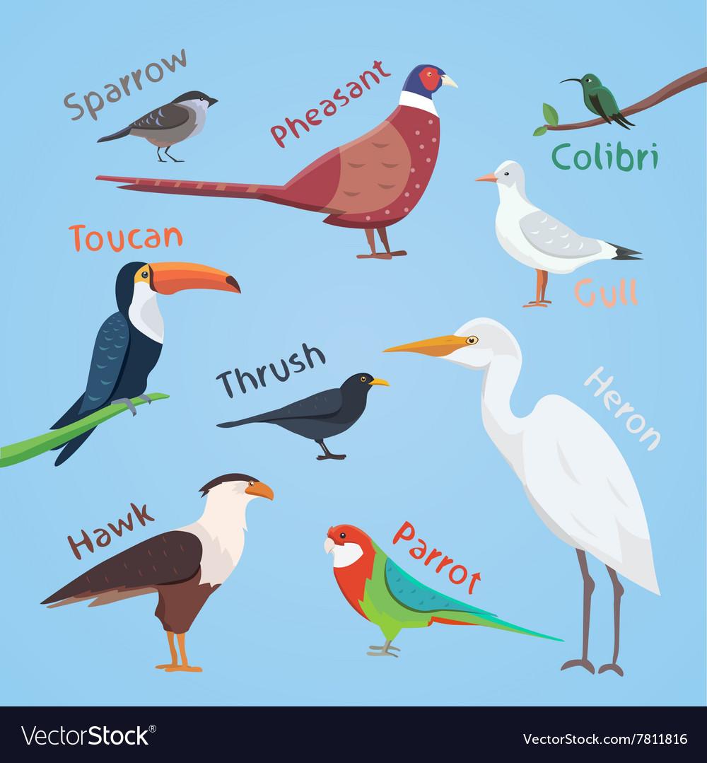 Bird set cartoon colorful eps vector image