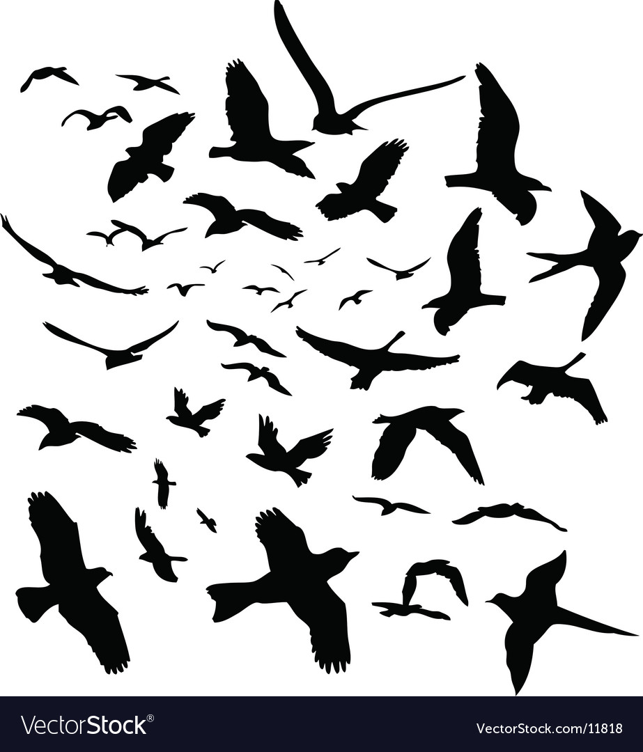 Bird graphics vector image
