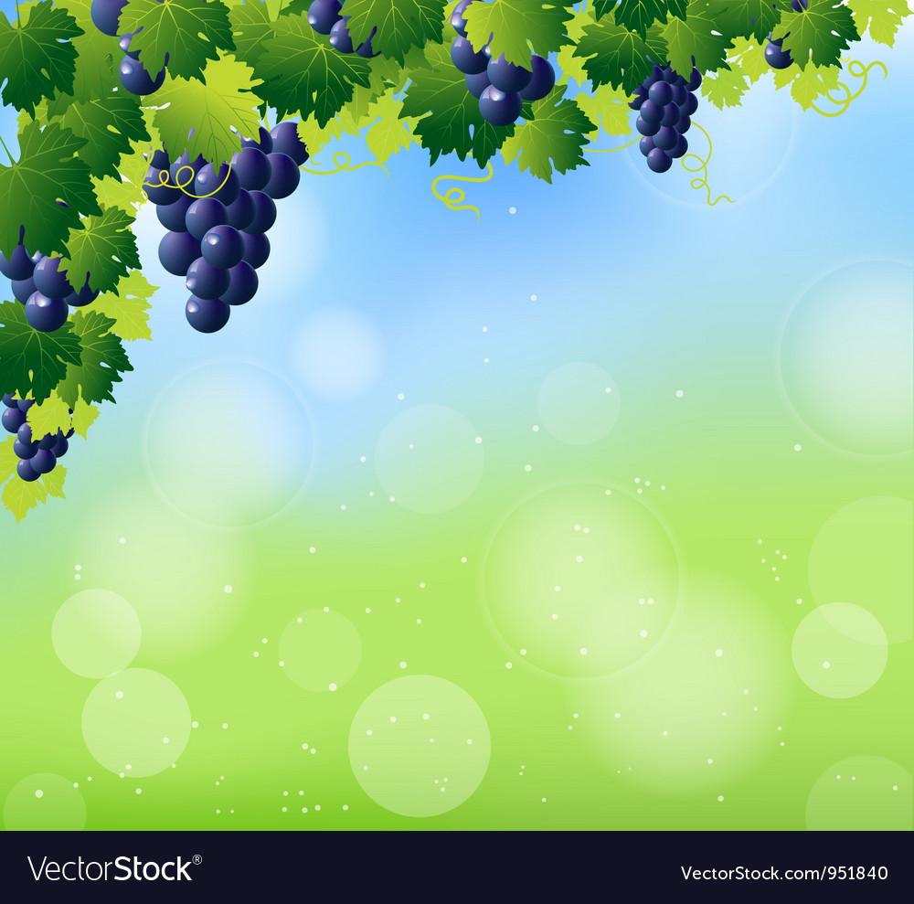 Vine summer corner vector image
