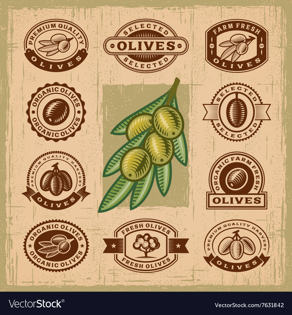 Vintage olive stamps set vector image
