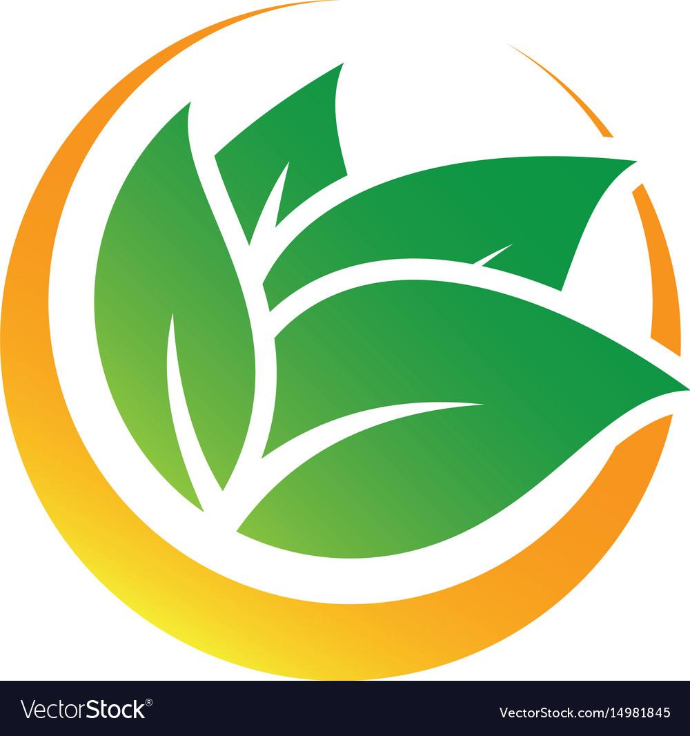 Circle leaf nature logo image vector image