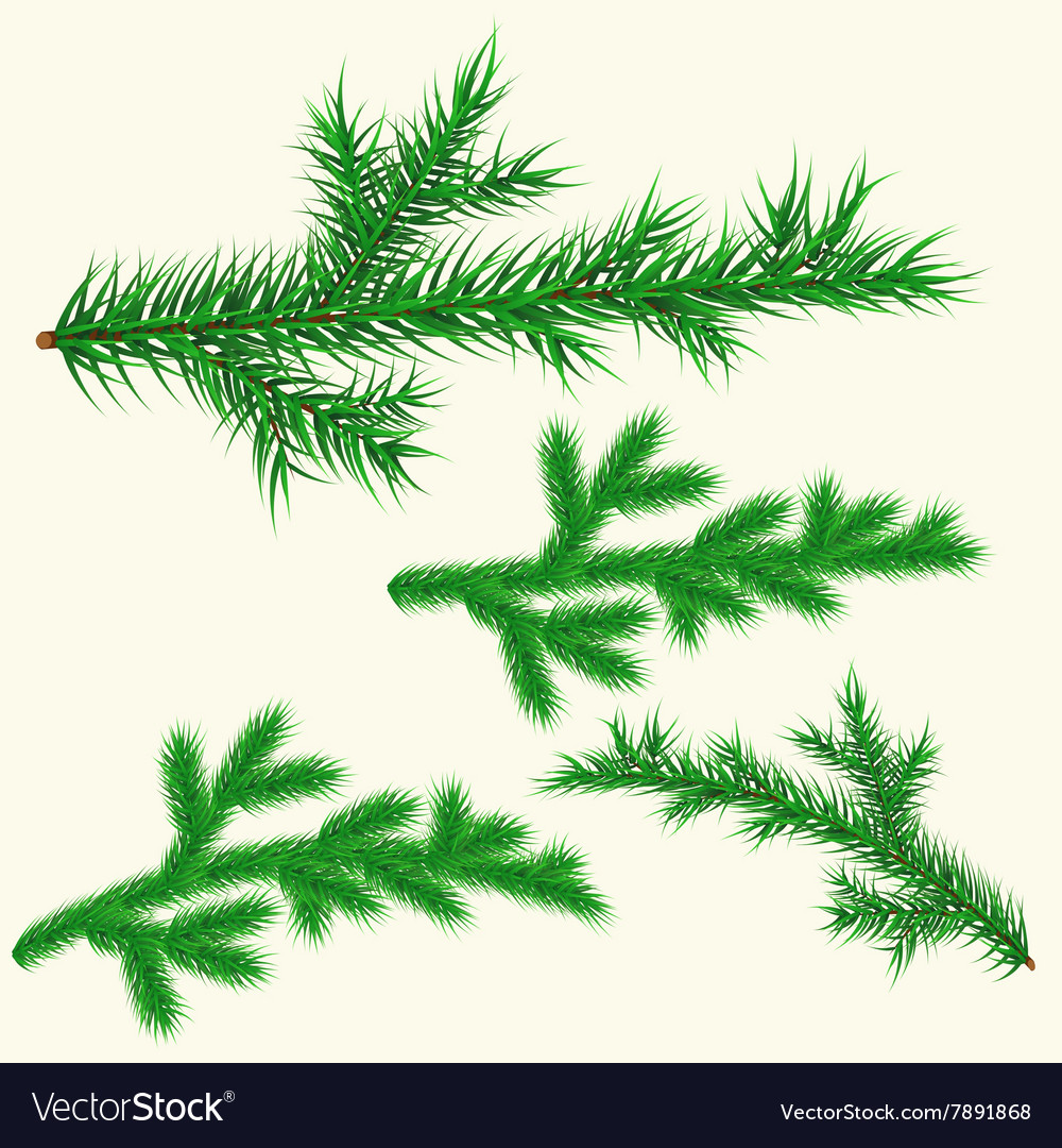 Pine branches set vector image