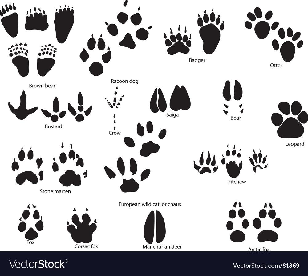 Animal trails prints vector image