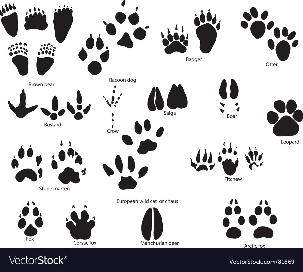 Animal trails prints vector image
