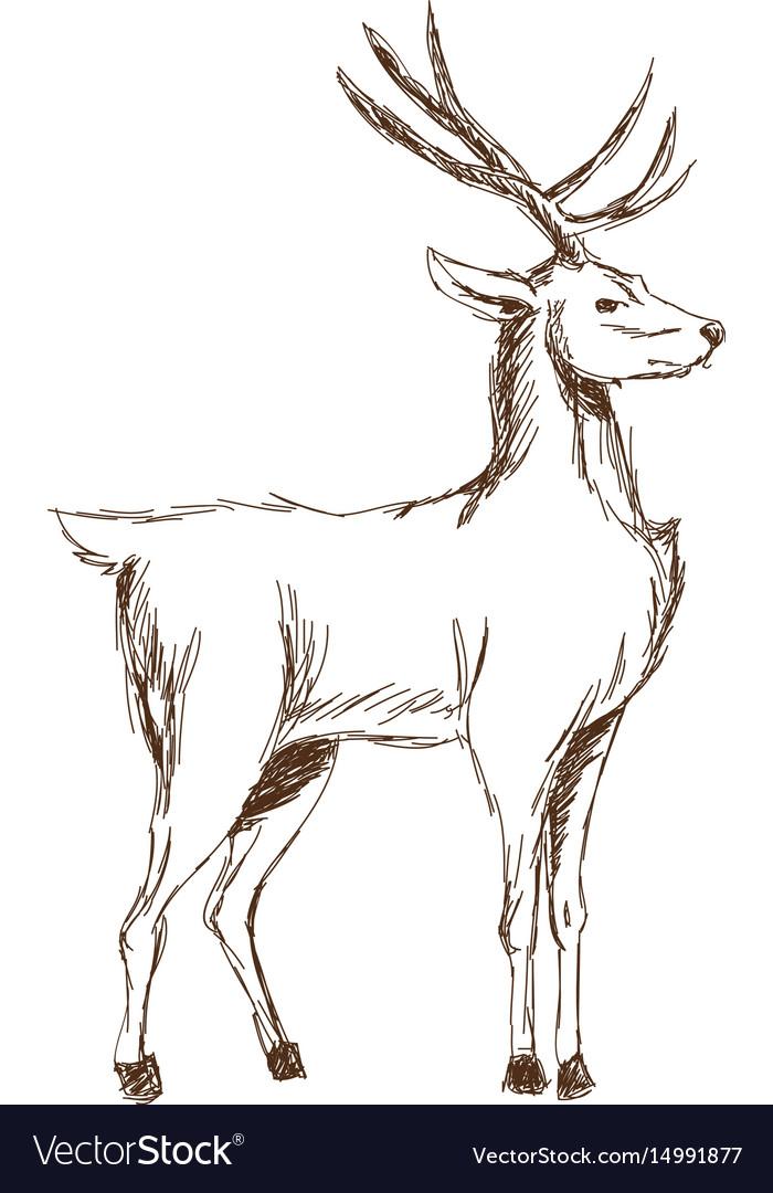 Christmas deer animal antler engraving style vector image