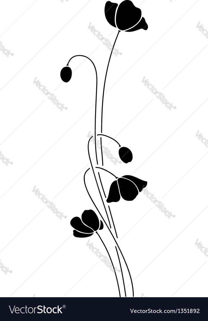 Abstract black poppy on white background vector image