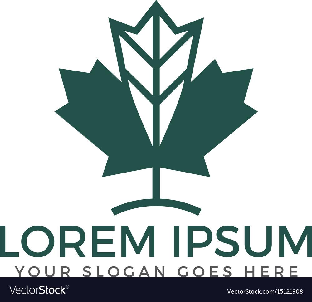Green maple leaf logo design template vector image