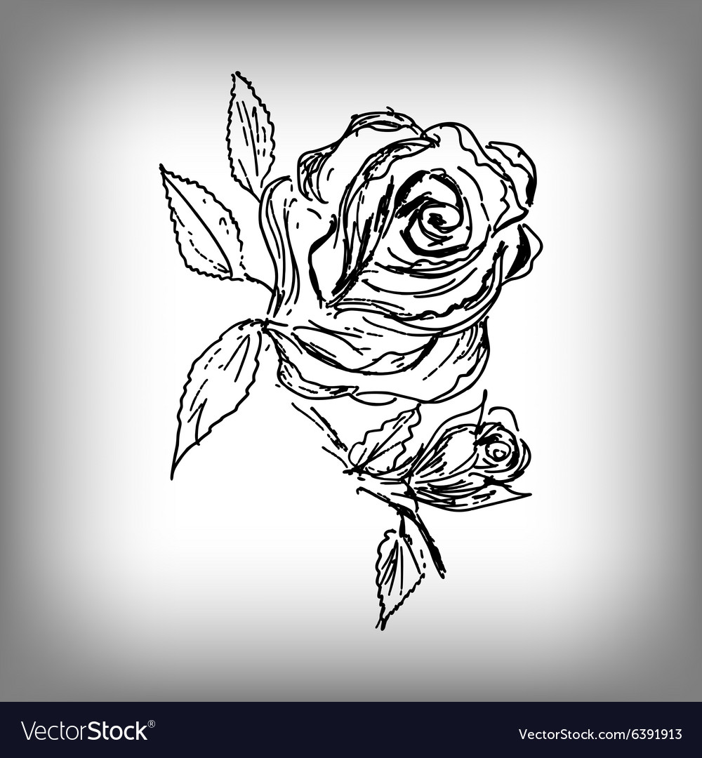 Rose flower by hand vector image