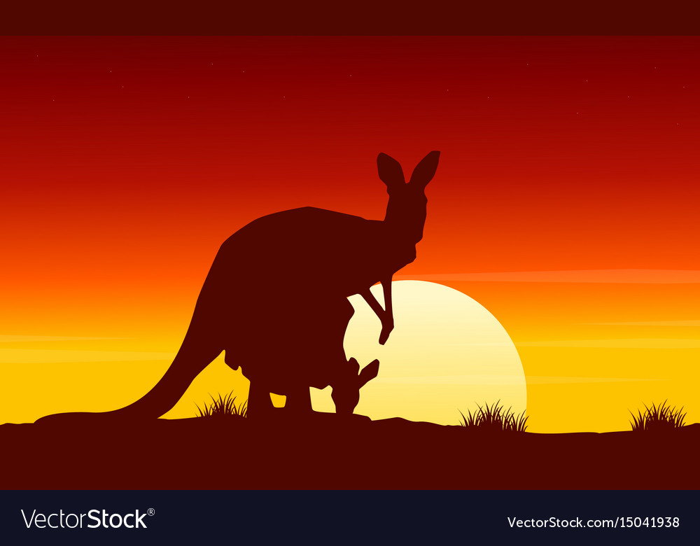 At sunrise kangaroo scenery beauty landscape vector image
