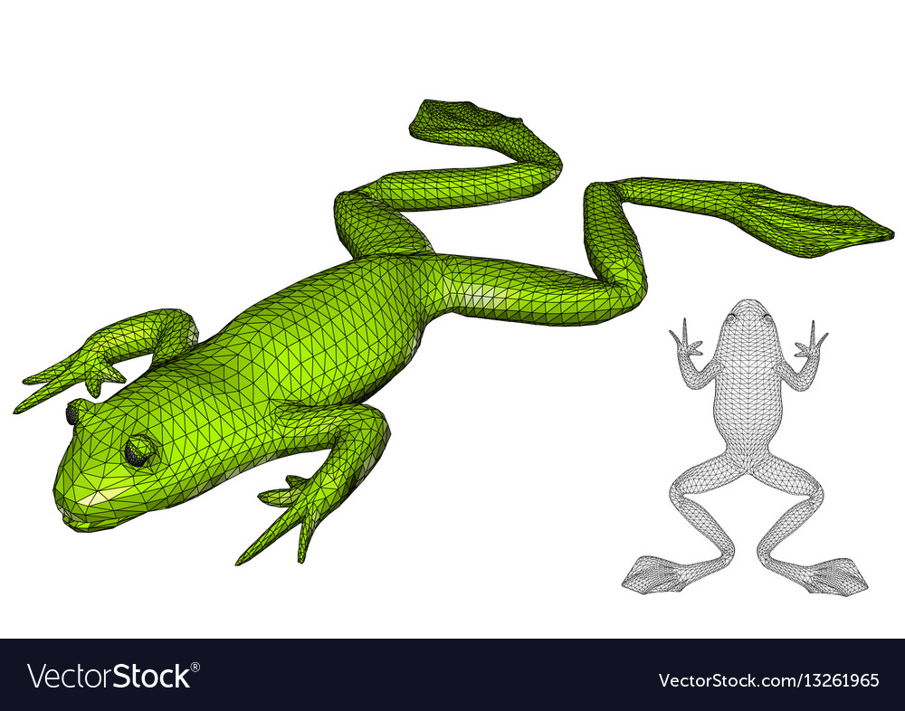 Frog on white vector image