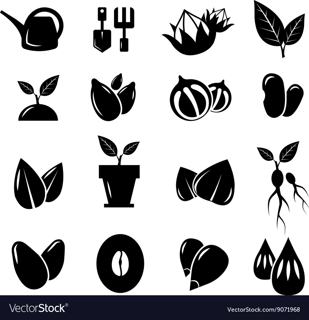 Seed and gardening icons vector image