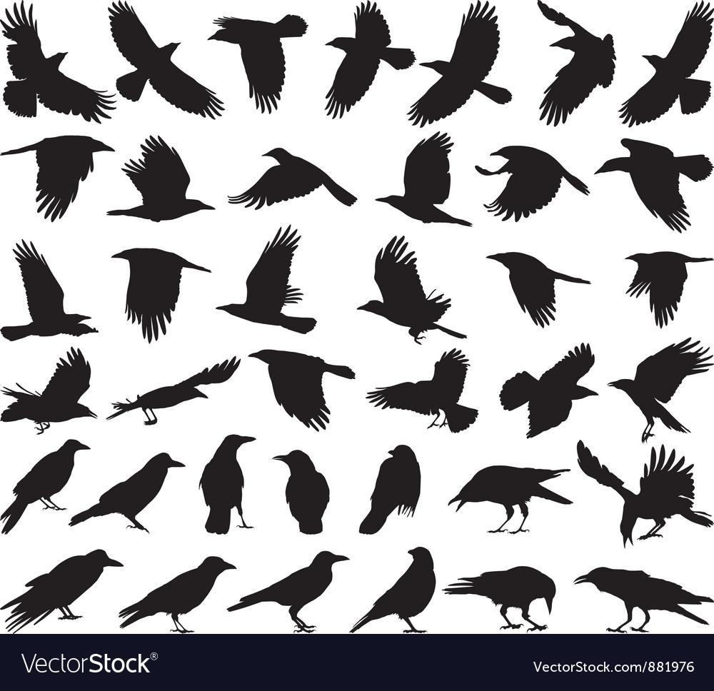 Bird carrion crow vector image