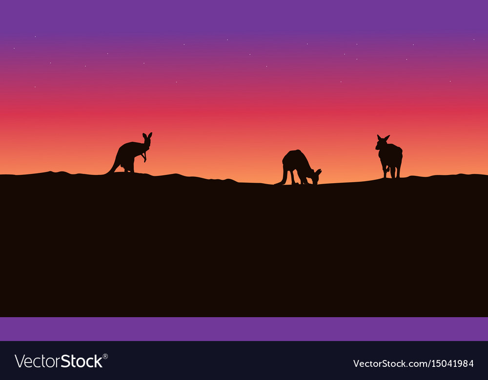 Silhouette landscape kangaroo with beauty sky vector image