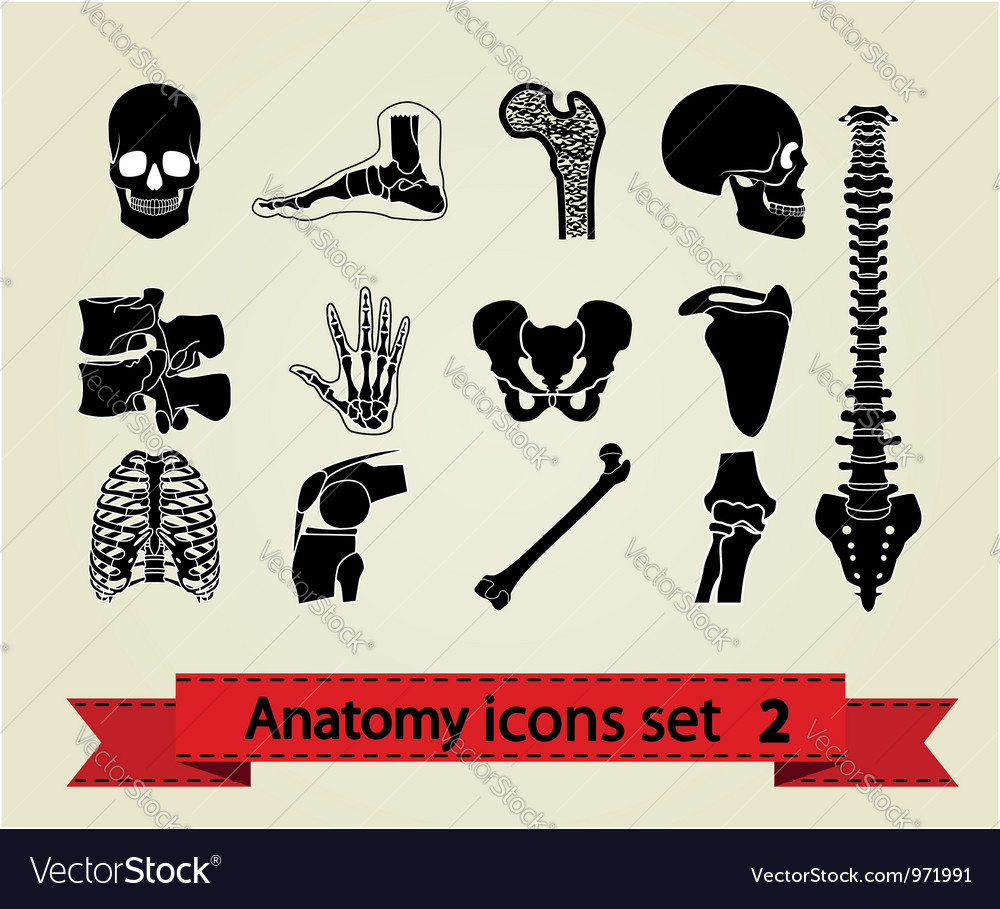 Anatomy icons set 2 vector image