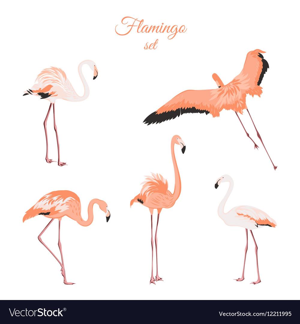 Set of isolated pink flamingos on white background vector image