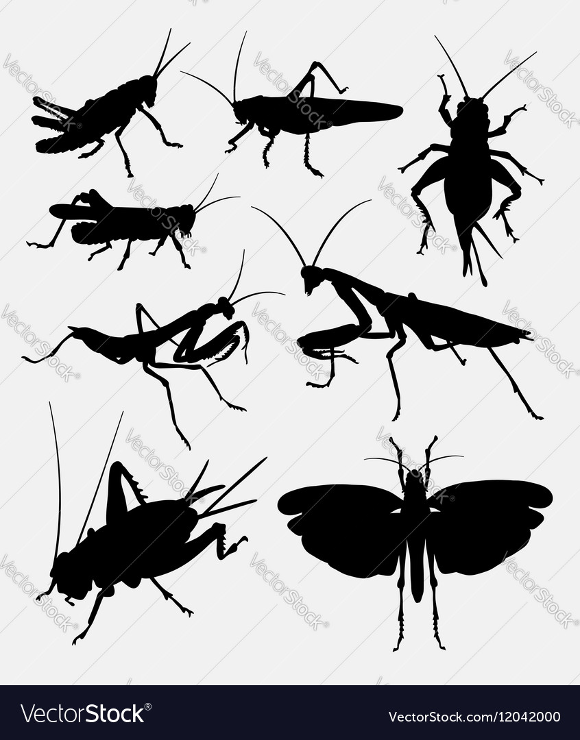 Grasshopper and cricket insect animal silhouette vector image