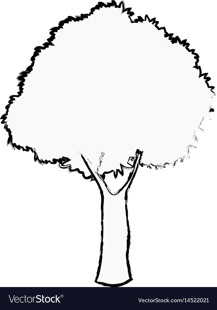 Oak tree foliage ecosystem plant sketch vector image
