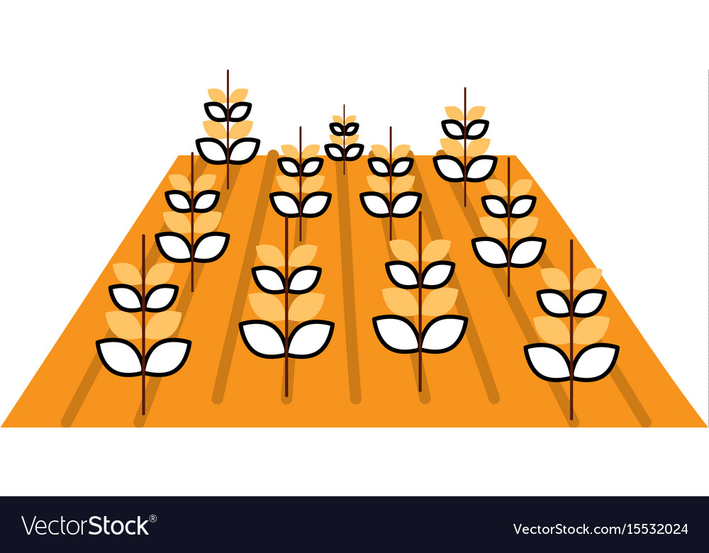 Wheat crop isolated icon vector image