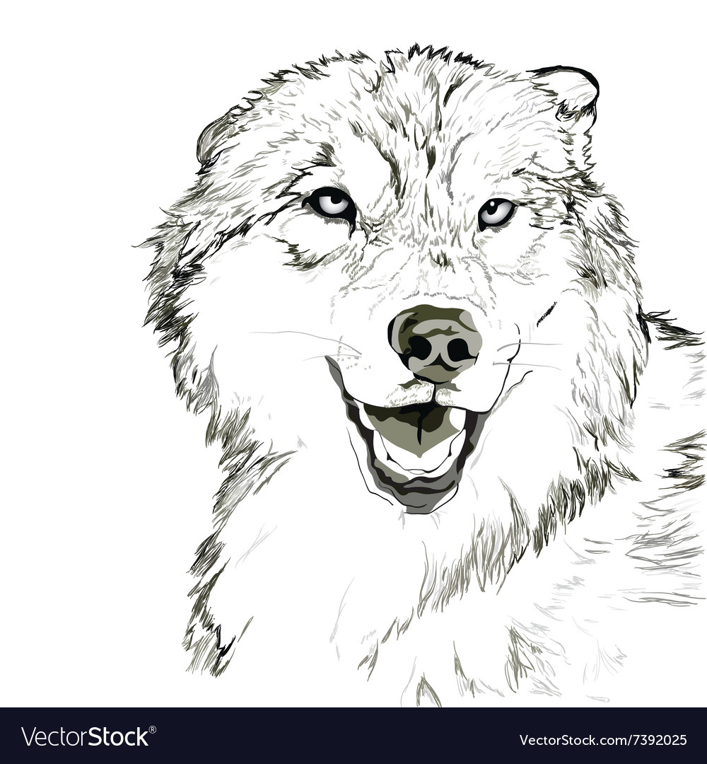 Wolf muzzle sketch vector image