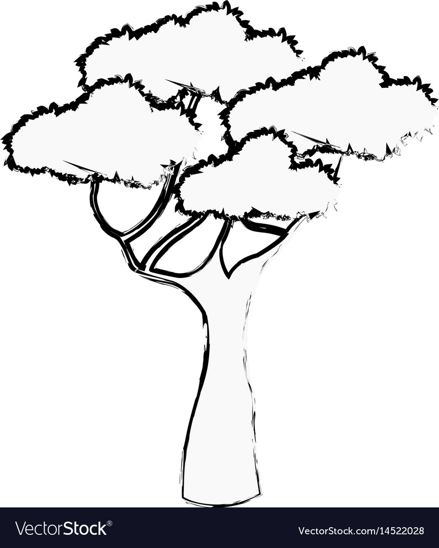 African tree foliage high forest sketch vector image