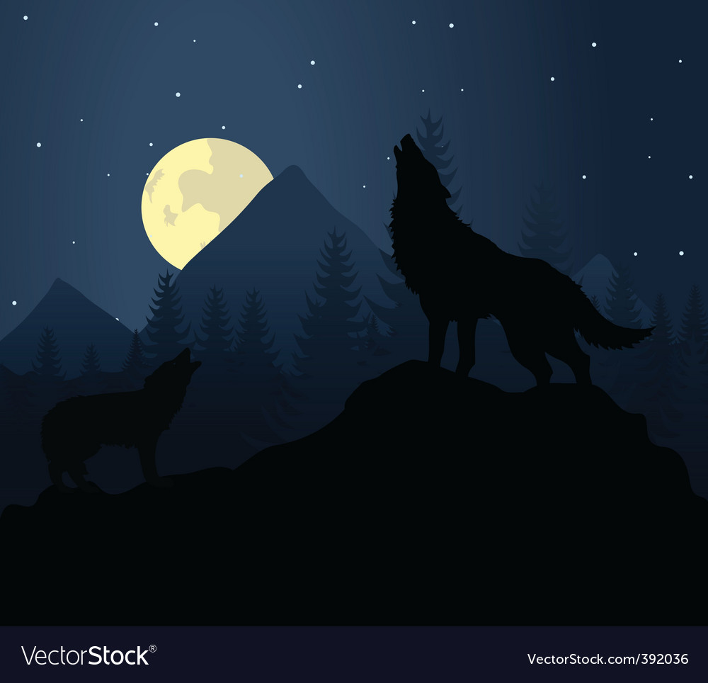 Night wolf vector image
