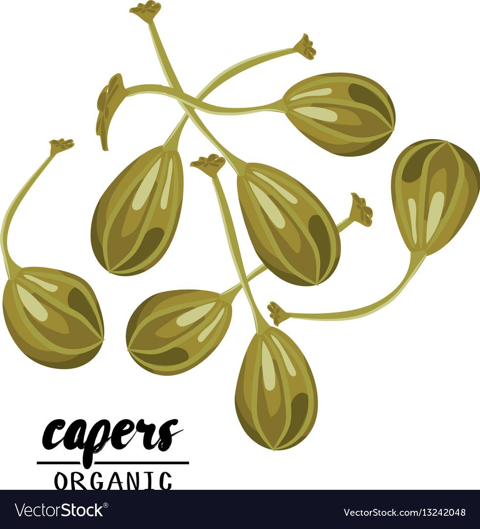 Cartoon capers ripe green vegetable vegetarian vector image