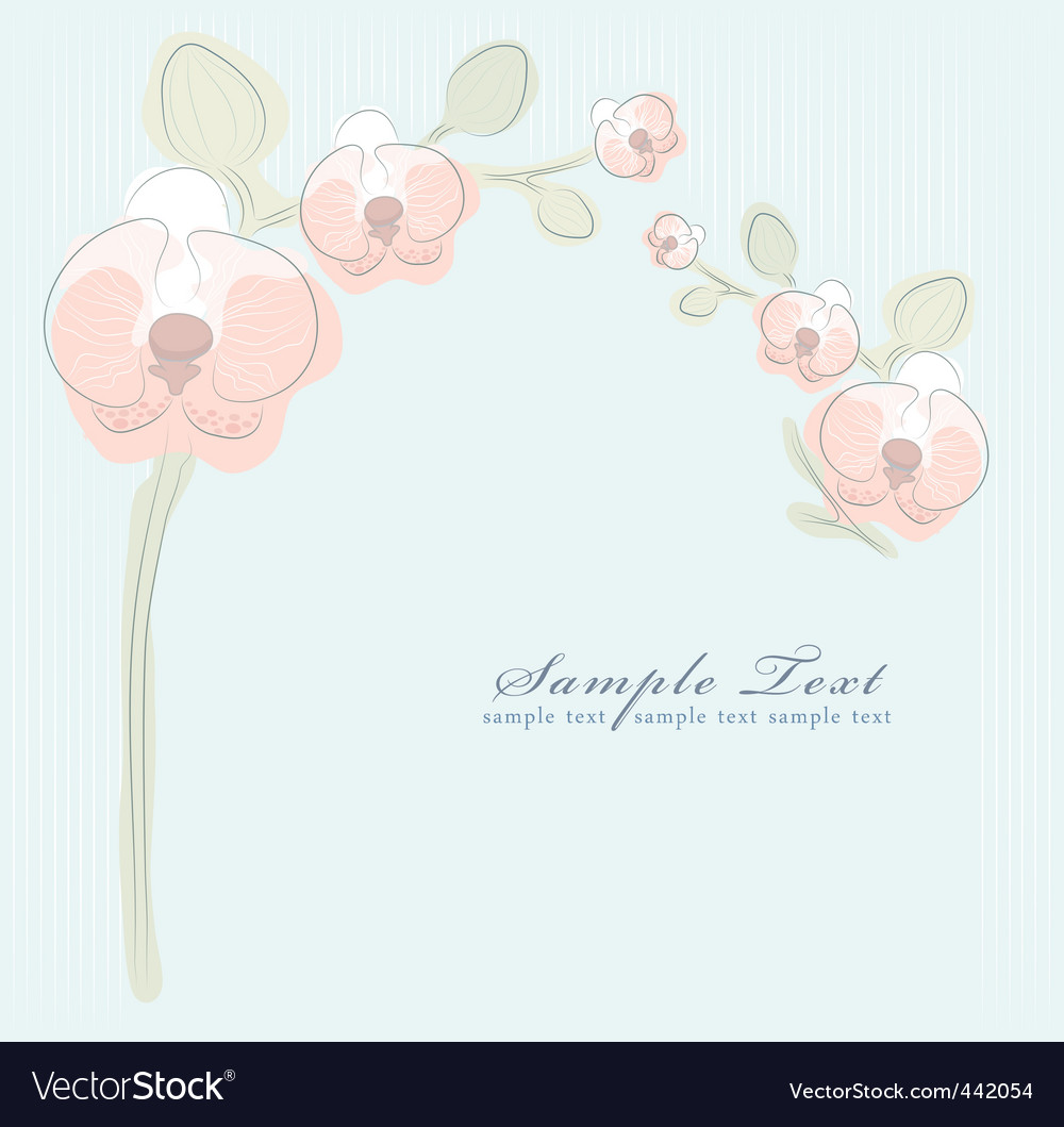 Floral orchid background vector image