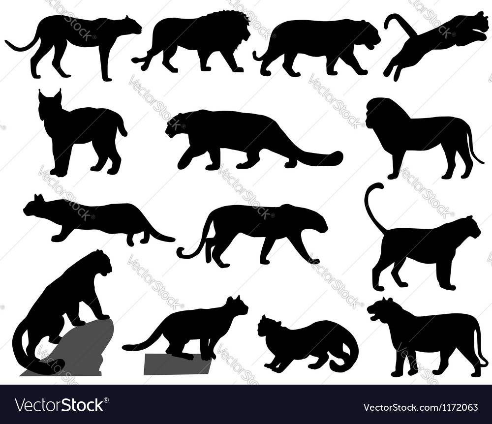 Wildcats vector image