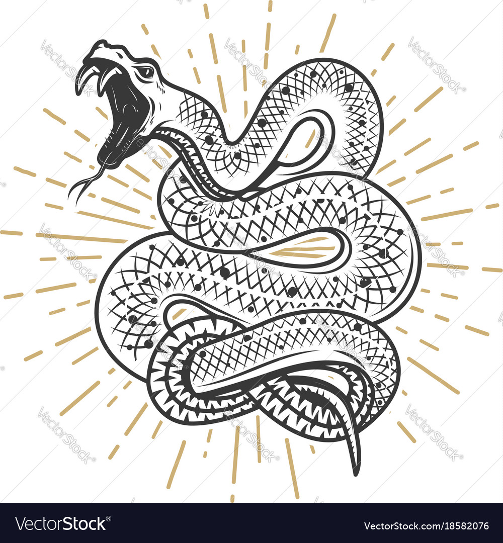 Viper snake on white background design element vector image