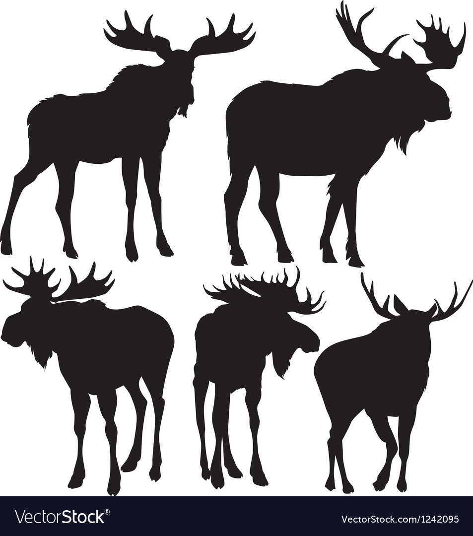 Elks silhouette vector image