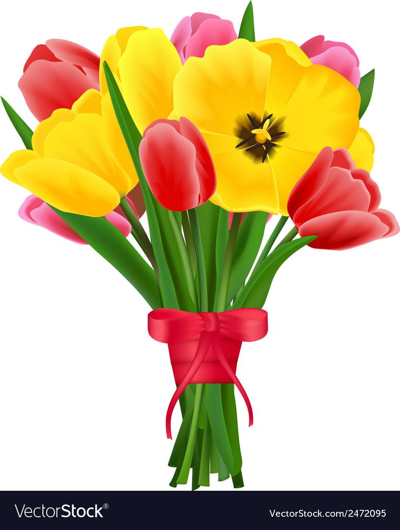 Tulip flower bouquet vector image