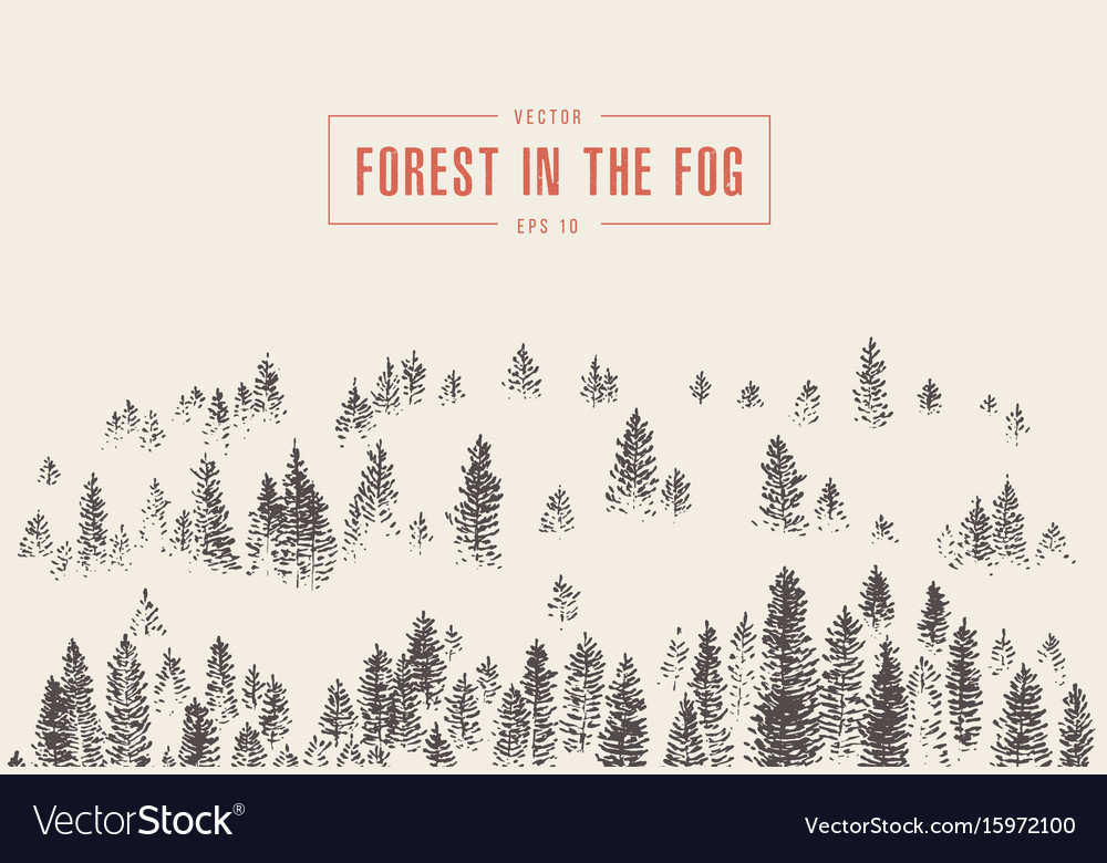 Misty fog pine forest mountain drawn sketch vector image