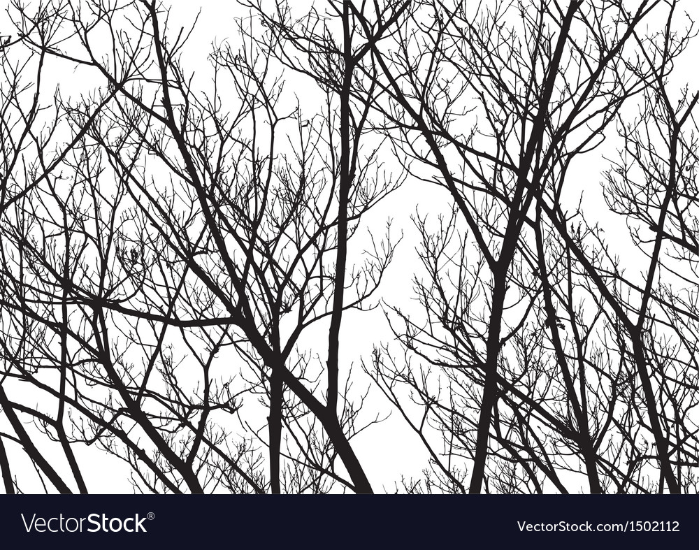 Tree Twigs Silhouette vector image