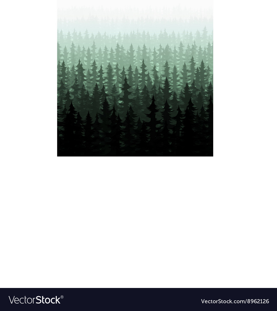 Nature forest landscape pine fir vector image