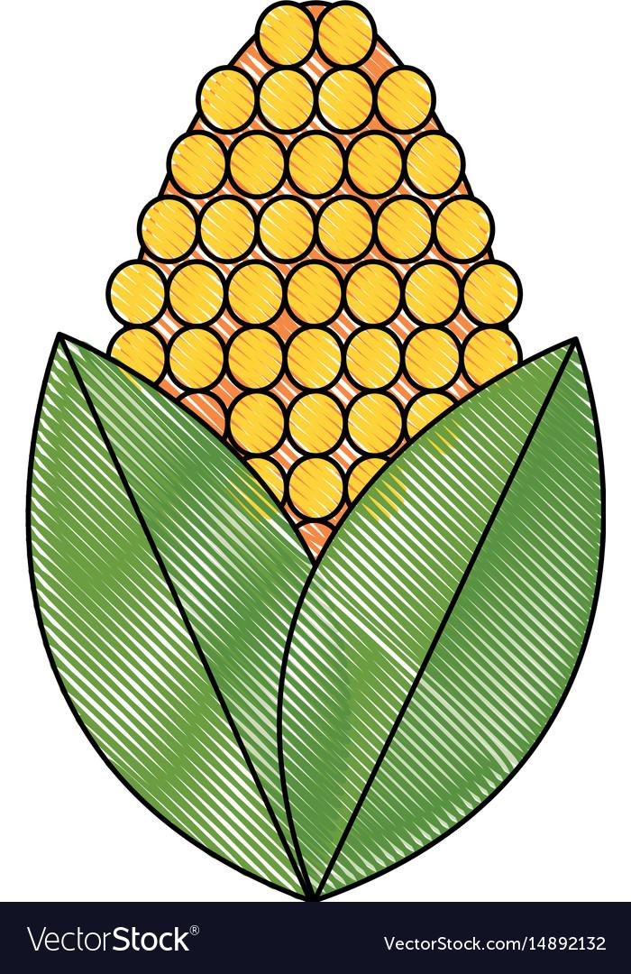 Drawing corn bioful alternative energy ethanol vector image drawing corn bioful alternative energy ethanol vector image buycottarizona