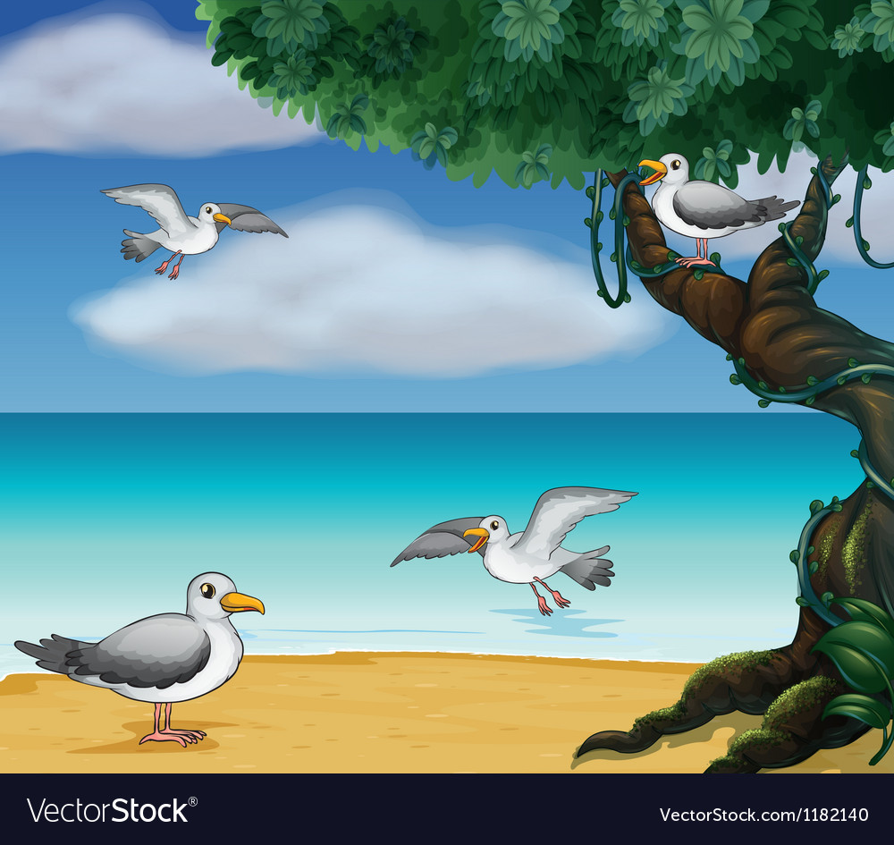 Cartoon Seagull vector image