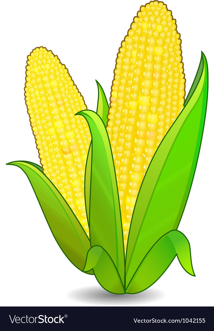 Corn ears icon vector image
