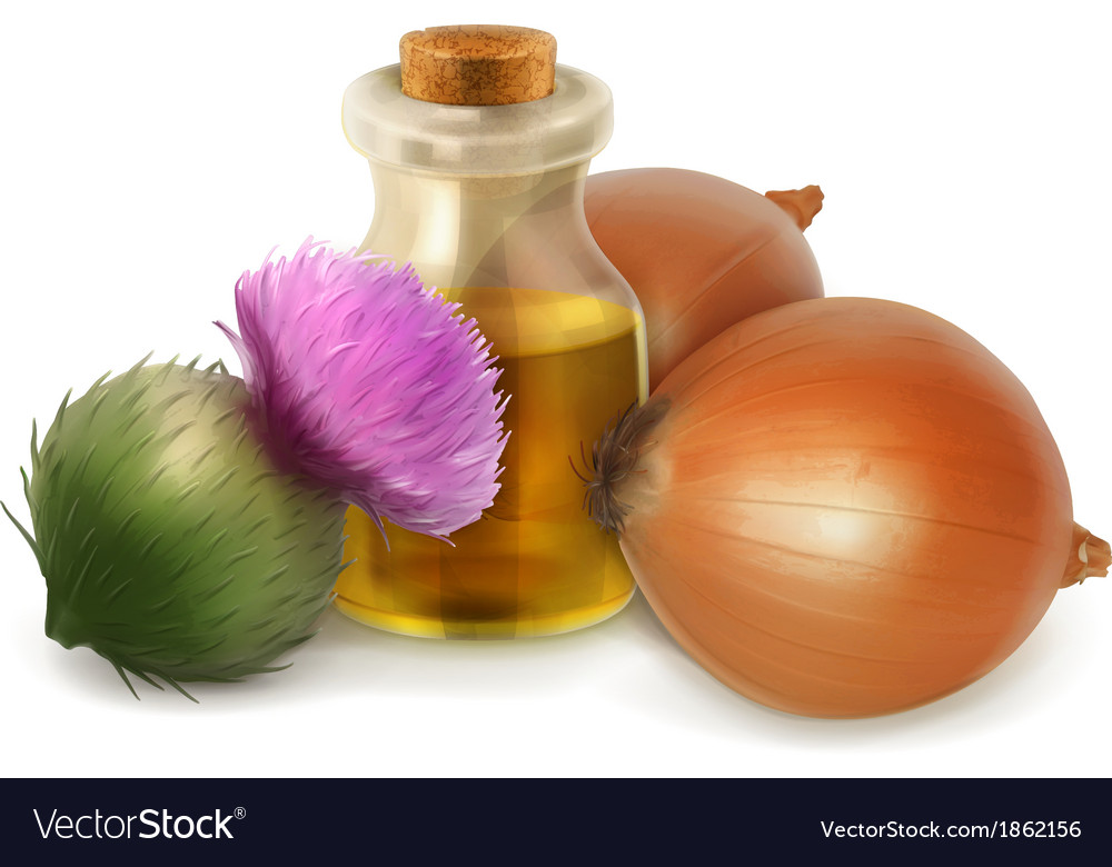 Onion and burdock folk medicine vector image