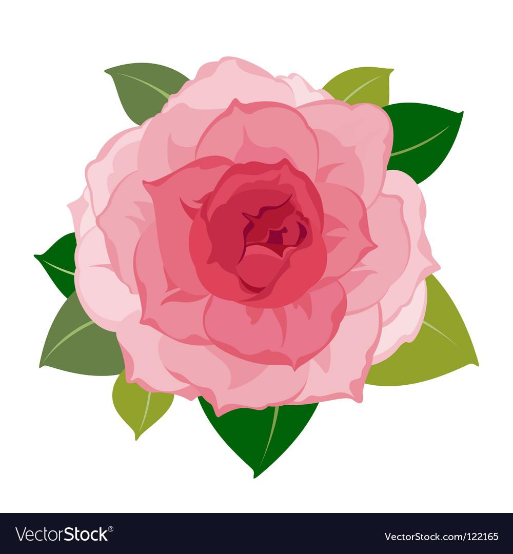 Soft flower petals closeup vector image