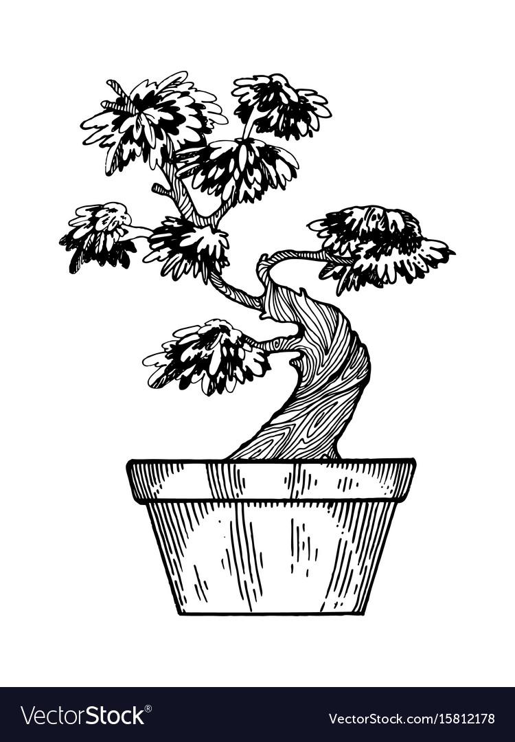 Bonsai tree engraving vector image