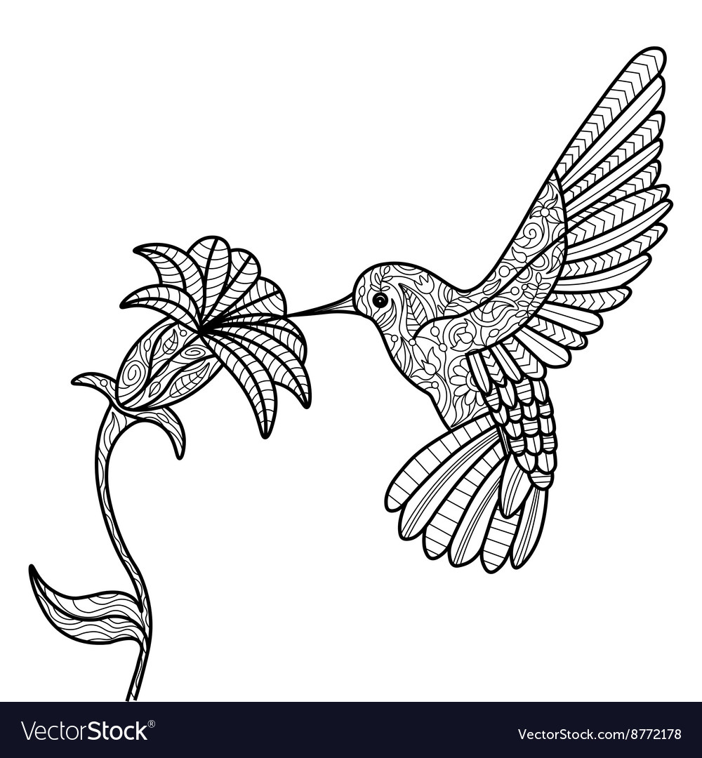 hummingbird coloring pictures virtren com