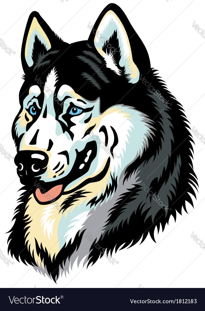 Siberian husky head vector image